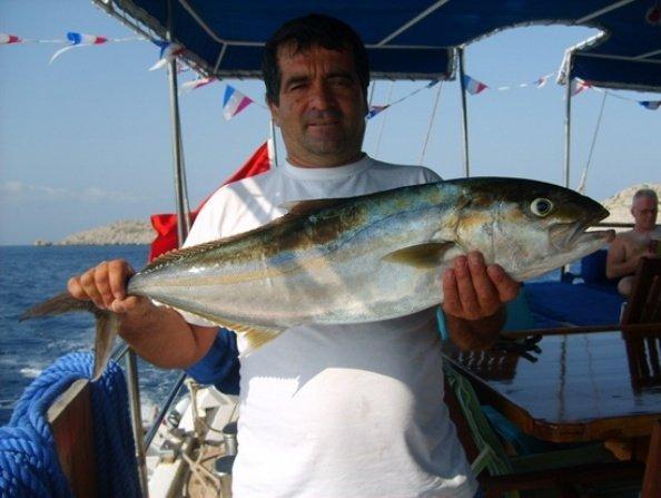 Caicco Alper 98
